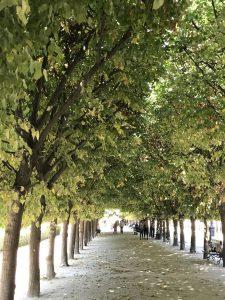 Allee im Jardin Palais Royal