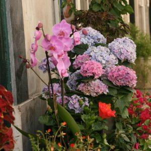 Blumenladen im Chiado, Lissabon