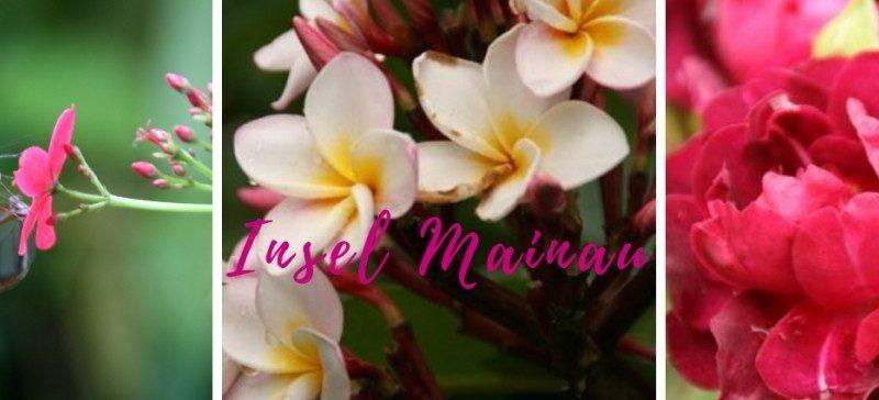Insel Mainau Blumenparadies