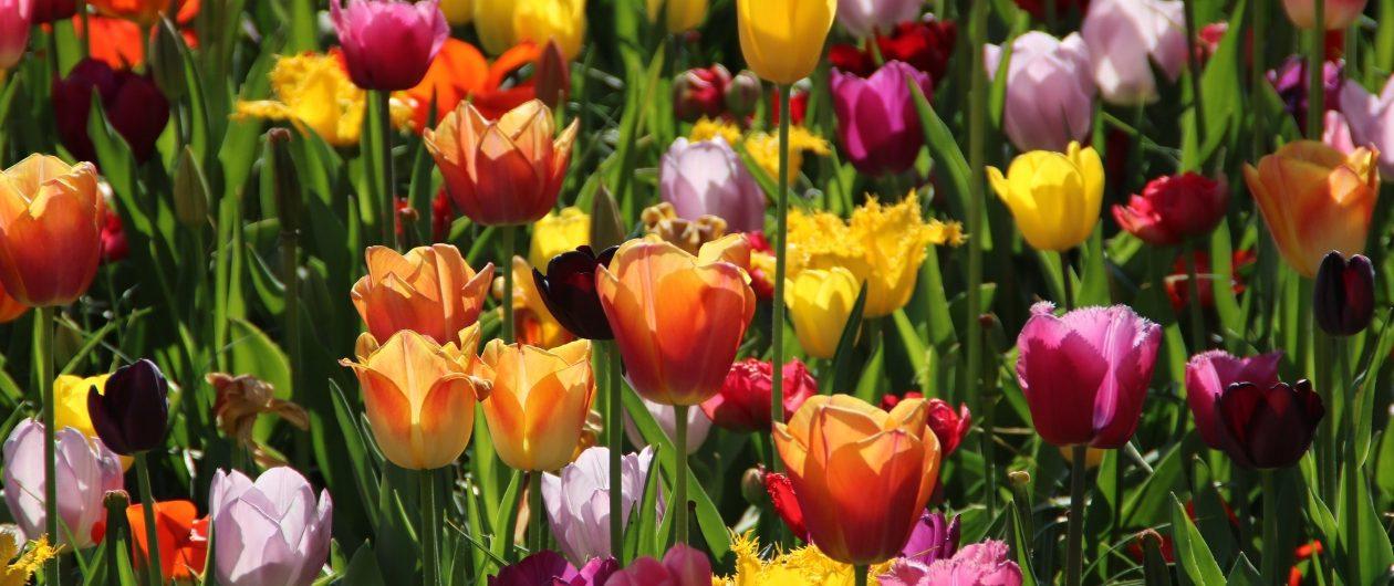 Tulpenmeer Keukenhof