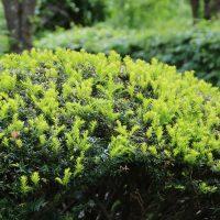 Grün im Japanischen Garten im Westpark München