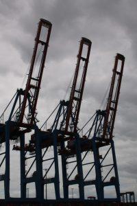 Giraffen im Hamburger Hafen