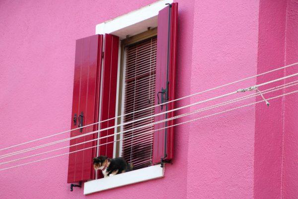 pinke Fassade mit Katze in Burano