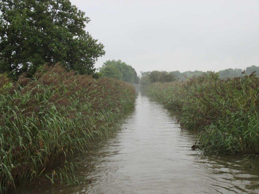 Der Kanal ist nicht überall so zugewachsen, aber es schaut schon sehr schön aus.