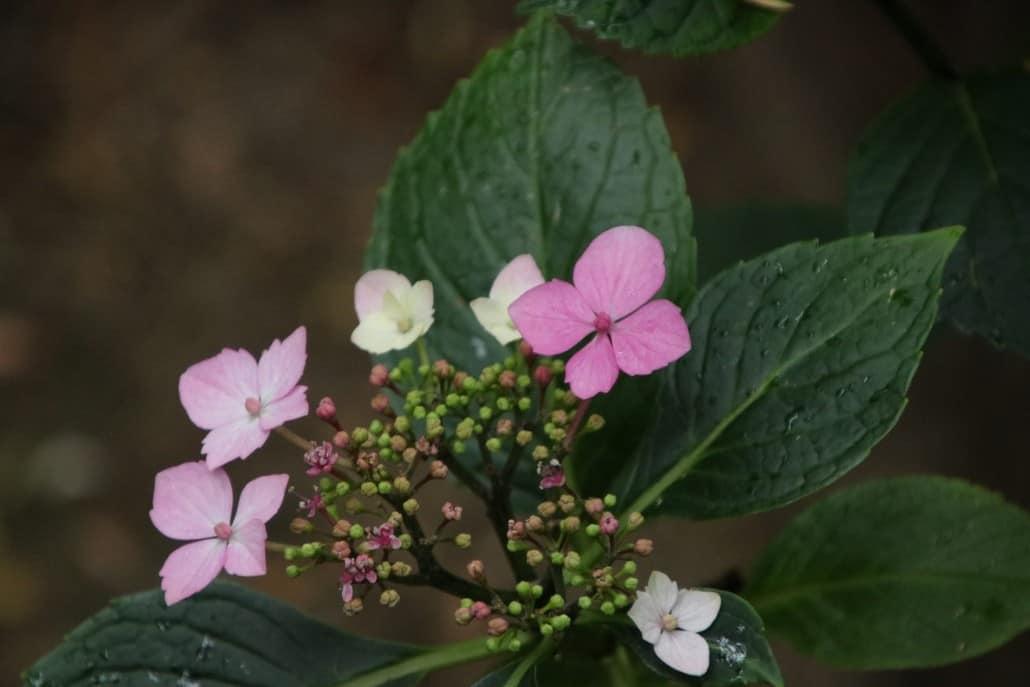 rosa Blümchen im Forstbotanischen Garten in Köln
