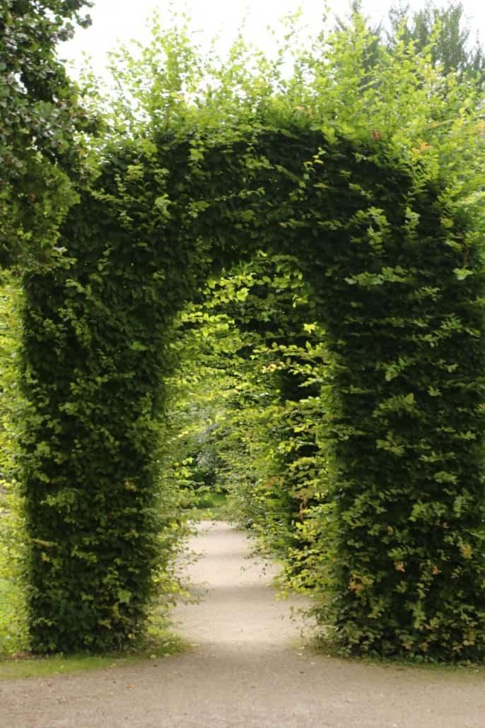 grüner Bogen im Rosengarten München